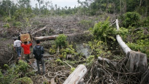 FAO Urges Indonesia to Cope with High Deforestation