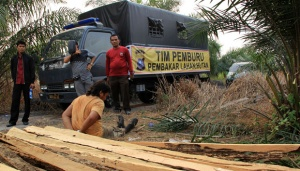 Deforestation Monitoring in Indonesia Hampered by Regulations