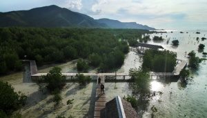 1,300 Hectares of Mangrove Forest Damaged