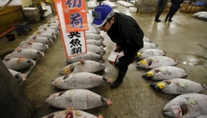 World`s Largest Fish Market Reopens at New Site in Tokyo