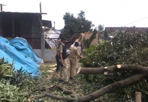 BMKG Warns of Strong Wind in Bogor