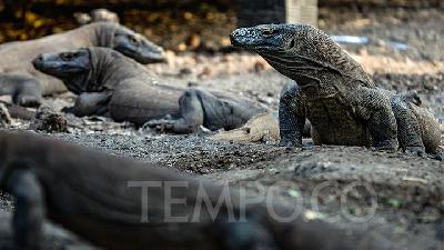 Komodo National Park Shut Down for 1 Year