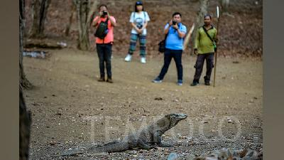Komodo National Park Temporary Closure Extended