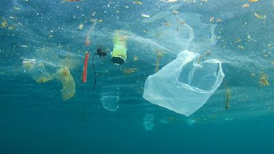 Snorkellers Scour Australian Waters for Plastic