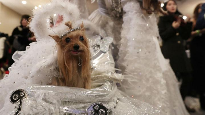 A dog sits in a carriage backstage at the 16th annual New York Pet fashion show in New York, U.S., February 7, 2019. REUTERS/Shannon Stapleton