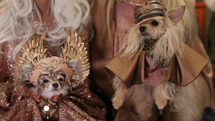 Dogs sit backstage at the 16th annual New York Pet fashion show in New York, U.S., February 7, 2019. REUTERS/Shannon Stapleton