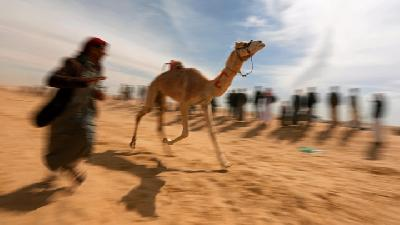 Robots Compete with Child Jockeys in Egyptian Camel Races
