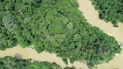 Satellite Imagery Shows Jambi is Experiencing Rapid Deforestation