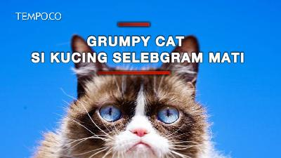 Grumpy Cat Si Kucing Selebgram Mati