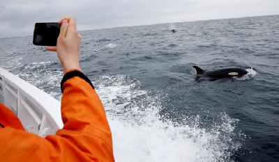 Former Japanese Fisherman Finds Profit in Whale Watching