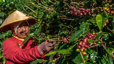 Coffee Futures Trade Grows 63.06 Percent in 2020