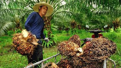 S. Sulawesi to Start Palm Oil Plant Construction in February End