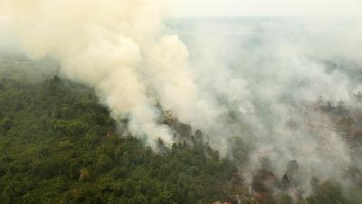 Arsonists Behind 99 Percent of Jambi's Land, Forest Fires: BNPB