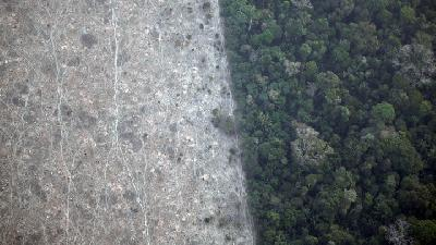 Aerial Images of Deforestation of Amazon Rainforest