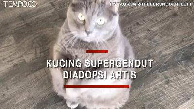 Viral, Bruno si Kucing Supergendut, Diadopsi Artis Lauren Paris