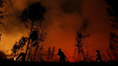 Indonesia's Firefighters on Frontline of Borneo's Forest Fire