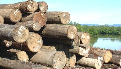 Ministry Confiscates 17 Containers of Illegal Timber in Surabaya