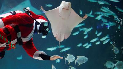 Diving Santa Delights Visitors To COEX Aquarium