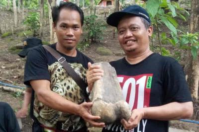 Ancient Elephant Fossil Found in West Java's Ecotourism Site