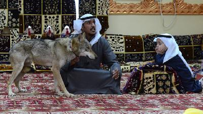The Saudi Family Keeping Wolves as Pets