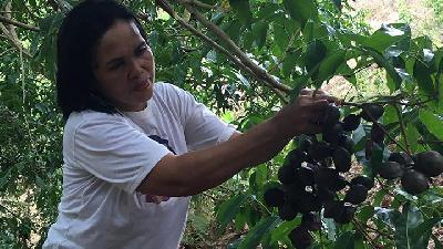 Jengkol Against Oil Palm