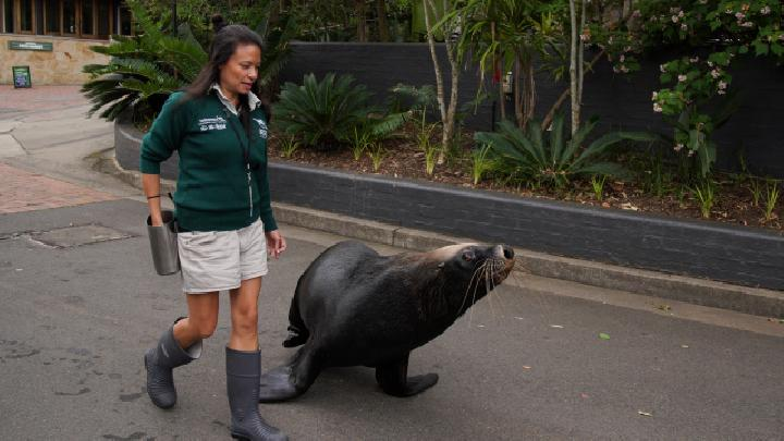 No Visitors at Australian Zoo but Training Keep to Schedule
