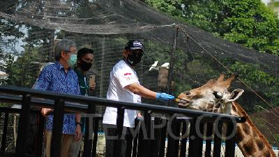 Pandemic, Indonesian Zoos Open Donation to Feed Animals