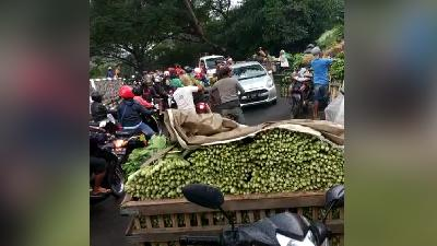 Ministry Comments on Farmers Giving Away Free Vegetables on Road