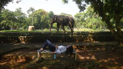 Ragunan Zoo Increases Visitor Capacity to 2,000 Tourists