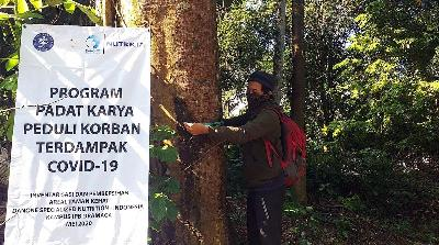 Environment Ministry: Forest Area in Java Island Only at 24 Percent