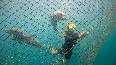 Bali Hosts First Centre to Return Captive Dolphins to The Wild