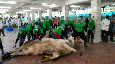 Pandemic Alters Eid al-Adha Animal Sacrifice Ritual in 2020