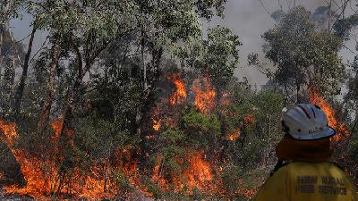 The Root Cause of Forest Burning