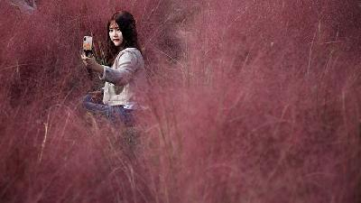 Tourists Take gorgeous Selfies in Pink Muhly Grass Field