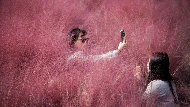 A woman takes a selfie as her friend adjusts her makeup in a pink muhly grass field amid the coronavirus disease (COVID-19) pandemic at a park in Hanam, South Korea, October 13, 2020. REUTERS/Kim Hong-Ji