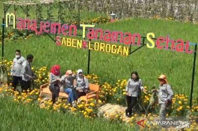 Refugia Flowers in Madiun; Pest-control Plants Turned into Agritourism Site